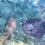 Foto de Centara Grand Island Resort & Spa Maldives