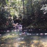 swimming in jungle