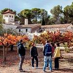 Excursiones de agroturismo, catas de vinos, experiencias fuera de la ciudad... #agriculturaltour