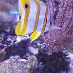 写真Aquarium du Cap d'Agde枚