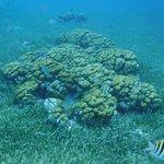 صورة فوتوغرافية لـ Deep Blue Scuba Diving