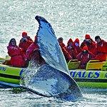 Παρακολούθηση δελφινιών και φαλαινών