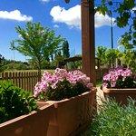 Fiori del patio esterno
