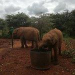 David Sheldrick Wildlife Trust ภาพถ่าย