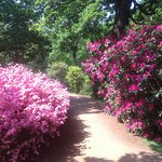 Foto Isabella Plantation