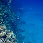Snorkelen bij een koraalrif