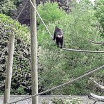 Foto de Jersey Zoo