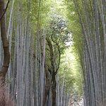 Cartoline da Kyoto, Giappone