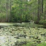 Ponds on property