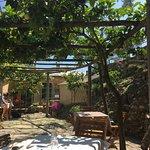 Schattiger Platz unter Zitronenbäumen