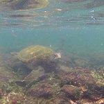 Snorkeling in Los Tuneles