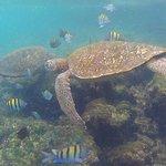 More snorkeling in Los Tuneles