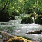 Bilde fra Oirase Mountain Stream