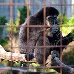 صورة فوتوغرافية لـ Brantford Twin Valley Zoo