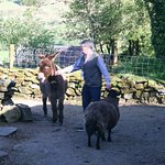 Owner feeding animals.