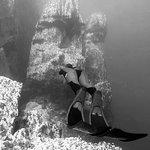 Photo of Freediving Coron