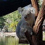 How Cute are these Koala bears!