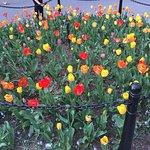 Washington Square Park (4)