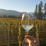 Vineyard-side tasting