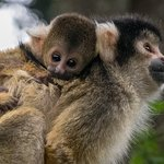 A home where primates can raise their young safe from human interference.
