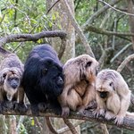 Family photo of one of our Howler groups