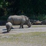 Brilliant zoo with some amazing animals.
