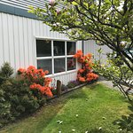 Geogeous flowers and shrubs on nicely maintained hotel grounds