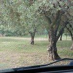 Фотография Agriturismo Al Vecchio Torchio Del Casale