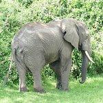 Elephant by Kazinga Channel, Queen Elizabeth NP
