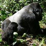 Bwindi Gorilla Tracking