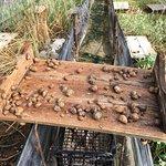 Portugal Farm Experience - Snail Farm Experience