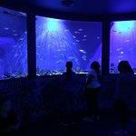 Pierce Creative Arts Elementary students exploring Sea Life!