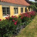 Haven er fyldt med blomstrende pæoner og valmuer
