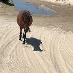 Wild Horse Adventure Tours Photo