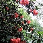 ภาพถ่ายของ Lea Gardens