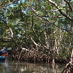 Paddling through the mangrove tunnels