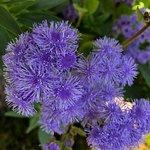 Inverness Botanic Gardens照片