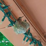 Brenda & Manny even ordered a hummingbird nest in their front yard for us!