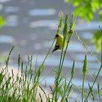 Foto de Haynes Point Provincial Park