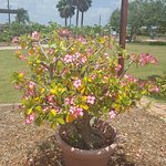Foto de South Texas Botanical Gardens & Nature Center