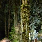 Billede af Maorilandsbyen Tamaki