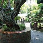 Bilde fra Truc Lam Vien Restaurants & Coffee