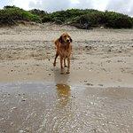 Фотография Dog Beach