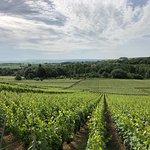 A visit to the vines.