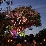 Foto de Tree of Life