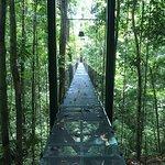 Suspension bridge to the tropical gardens