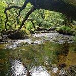 Bilde fra Golitha Falls