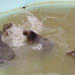 Φωτογραφία: Mablethorpe Seal Sanctuary and Wildlife Centre
