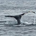 Foto de New England Aquarium Whale Watch