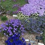 Bilde fra Betty Ford Alpine Gardens